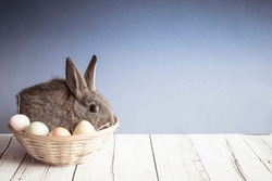 Cute Easter bunny nestled in a basket with colorful eggs on blue background. Spring wallpaper with copy space.