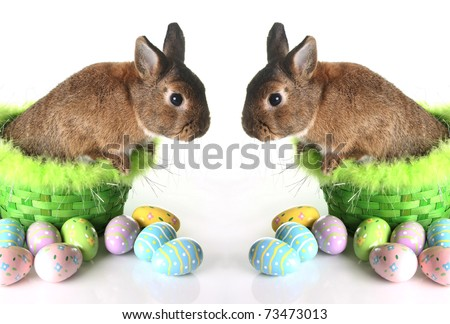 easter bunnies and chicks and eggs. unnies, chicks eggs