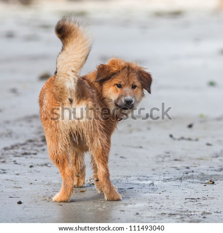 cute Elo puppy standing on the beach and looking back