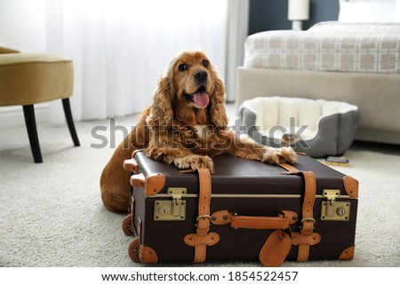 Cute English Cocker Spaniel and suitcase indoors. Pet friendly hotel