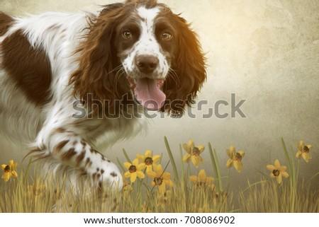 cute english springer spaniel dog running in a digital field of daffodils #708086902