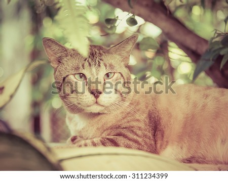 Cute fat snowy cat is looking and focusing something in the green nature surroundings in vintage retro color. Focus on cat eyes.