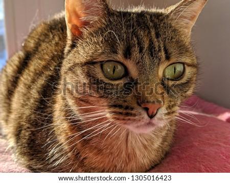 Cute feline lounging #1305016423