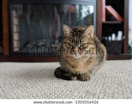 Cute feline lounging #1305016426