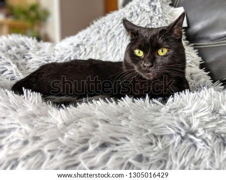 Cute feline lounging #1305016429