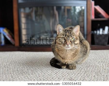 Cute feline lounging #1305016432