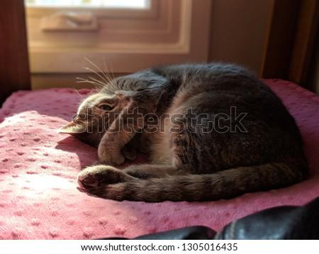Cute feline lounging #1305016435