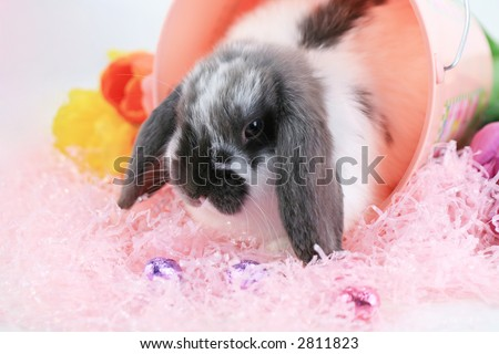 Cute floppy eared bunny with pink easter grass and candy with flowers