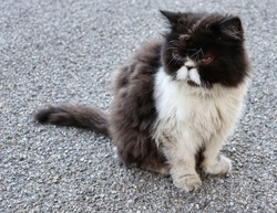 Cute fluffy brown and white cat sitting on the street with face of bad mood