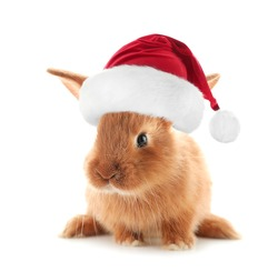 Cute fluffy bunny in Santa hat on white background