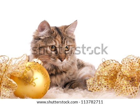 cute fluffy cat and yellow christmas decoration on white background