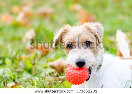 Cute fluffy dog waiting to play with toy at walk
