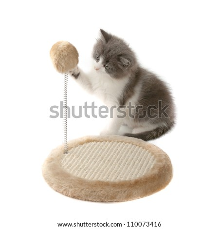 Cute fluffy gray and white kitten playing with scratching toy - stock photo