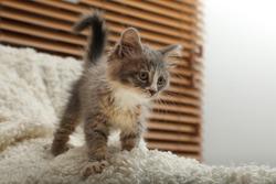 Cute fluffy kitten on white blanket indoors