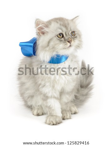 cute fluffy kitten with blue bow, isolated over white