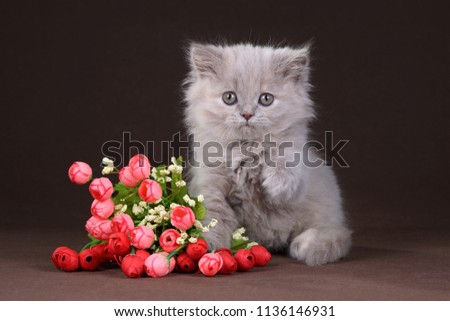 Cute fluffy kitten with flowers on a brown background #1136146931