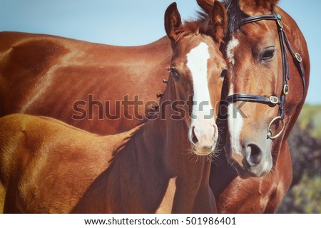 Cute foal with his mother