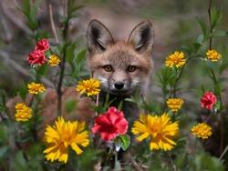 Cute fox cub in beautiful flowers.