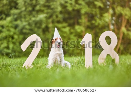 Cute fox terrier wearing party hat sitting in the park near 2018 wooden numbers New Year celebration greeting card.  #700688527