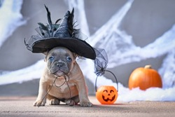 Cute French Bulldog dog puppy dressed up with large Halloween witch hat in front of seasonal background with spider webs and pumpkin