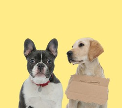 cute french bulldog dog wearing collar next to a labrador retriever dog wearing carton board sad on yellow background