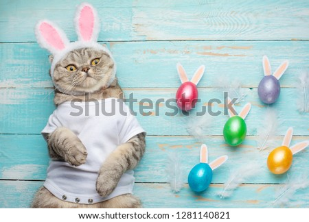 Cute funny beautiful cat with rabbit ears, Easter background with eggs. View from above. Easter background