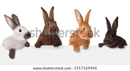 Cute funny bunnies peeking out of blank banner, space for text. Easter symbol Stock photo ©