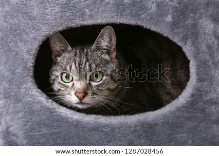 Cute funny cat hiding in its house #1287028456