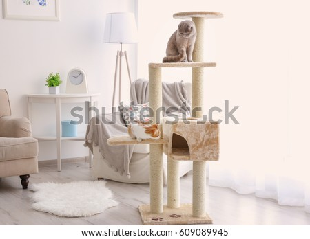 Cute funny cats playing on tree at home