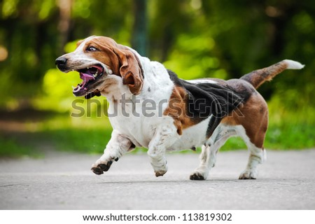 cute funny dog running on the road - stock photo