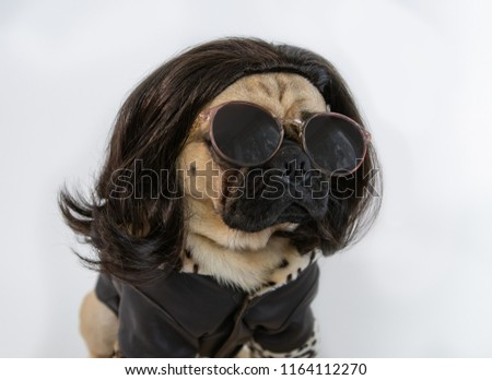 Cute funny pug wearing sunglasses, a brown haired wig and leather jacket #1164112270