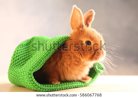 Cute funny rabbit in green hat on wooden table