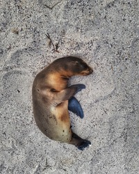 cute fur seal lying on white sand
