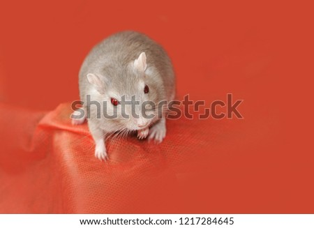 Cute gerbil on exhibition of rodents