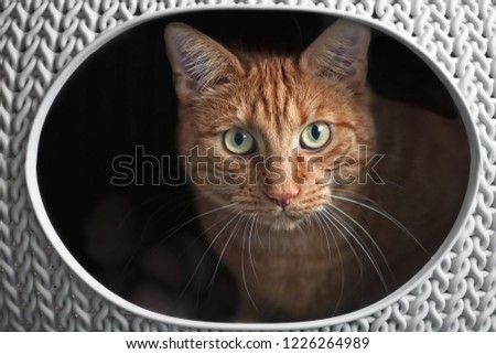 Cute ginger cat in a cat basket looking curious to the camera.. #1226264989