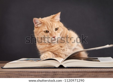 Cute ginger cat is reading a book