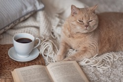 Cute ginger cat is sleeping in the bed on warm blanket. Cold autumn or winter weekend while reading a book and drinking warm coffee or tea.