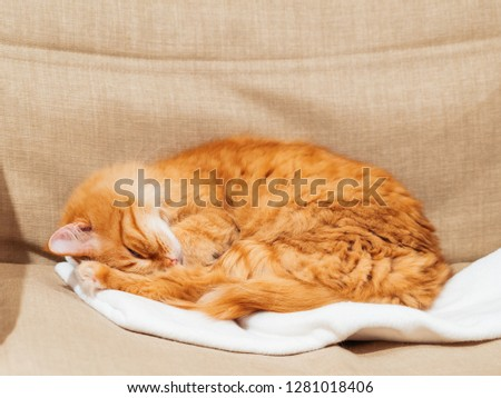 Cute ginger cat is sleeping on chair. Fluffy pet dozing on white fabric. Cozy home.