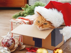 Cute ginger cat lies in box with Christmas and New Year decorations on wooden background. Fluffy pet with red Santa Claus hat. Fuzzy domestic animal during winter holiday preparation.