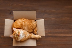Cute ginger cat lies in carton box on wooden background. Fluffy pet with green eyes is staring in camera. Top view, flat lay.