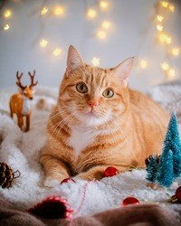 Cute ginger cat looking at the camera surrounded by christmas decoration: star shaped lights, deer, pine cones, pine trees and red christmas balls