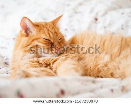 Cute ginger cat lying in bed. Fluffy pet dozing. Cozy home background, morning bedtime.