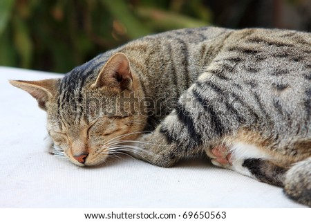 Cute ginger cat sleeping on a table.