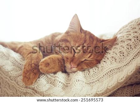 Cute ginger cat sleeps on warm knit sweater #251695573