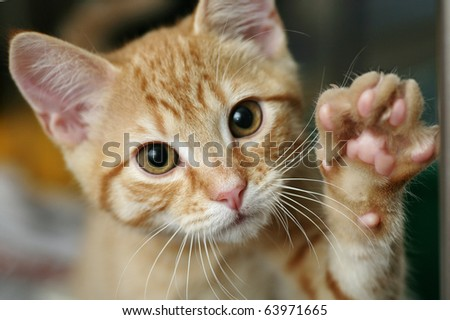 Cute ginger kitten waving