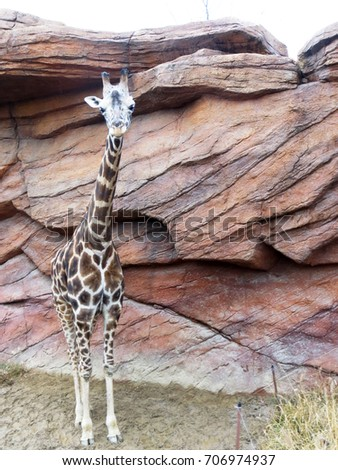 Cute giraffe #706974937