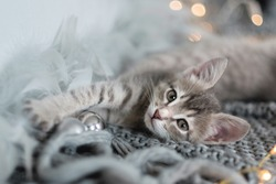 Cute gray kitten  lies on the bed and looking at the camera, the background of the bokeh of Christmas lights, the concept of the New Year and Christmas