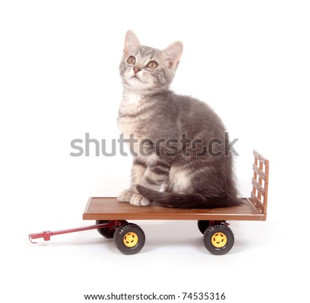 Cute gray kitten sitting on a toy wagon on white background