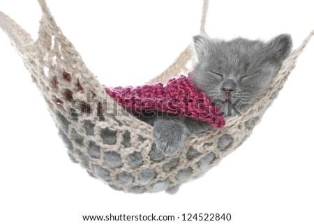 Cute gray kitten under a blanket asleep in a hammock on a white background.