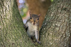 cute gray little squirrel at the park
